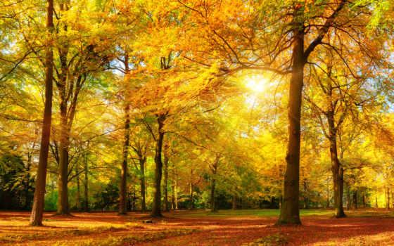 осень, лес, панорама, природа, gorgeous, дизайнерские, картинка, free, пушкин,