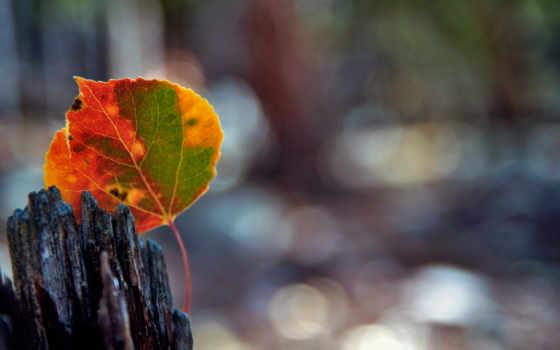 осень, лист, розы, макро, devushki, блики, боке, dry, природа, листва,