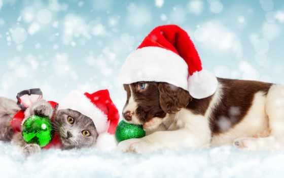 собака, кот, christmas, щенок, котенок, stock, photos, toys, веревка,