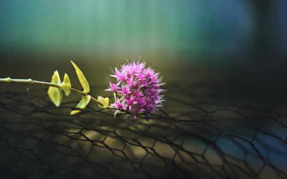 цветок, макро Фон № 25496 разрешение 1920x1200