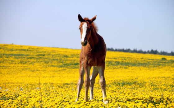 поле, лошадь, лошади