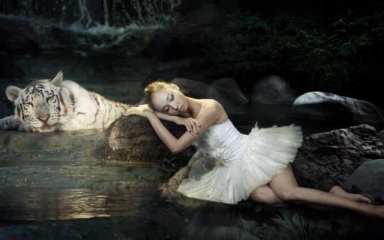 девушка, тигр, white, балерина, спят, воды,