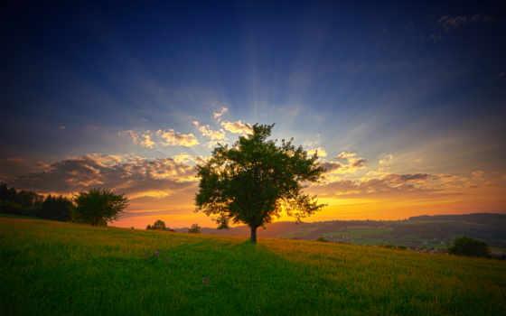 рассвет, утро, rays, sun, природа, туман, oblaka, лес, дерево, трава, склон,