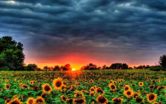 поле, подсолнухи, небо, подсолнухов, pictures, pin, пейзажи -, trees, sun,