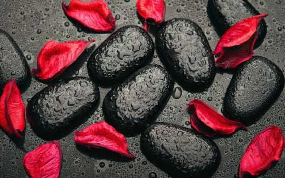 камни, black, лепестки, скинали, красные, орхидеи, скалы, цветная, спа, камнях,