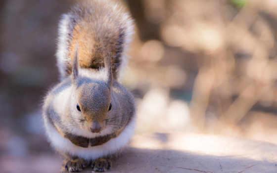 animals, videotabi, goodfon, iphone, animal, stump, happy, twitter, tapety,