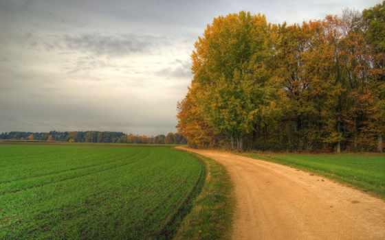 поле, дорога, trees, поворот,
