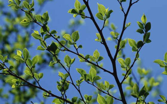 небо, листья, весна,