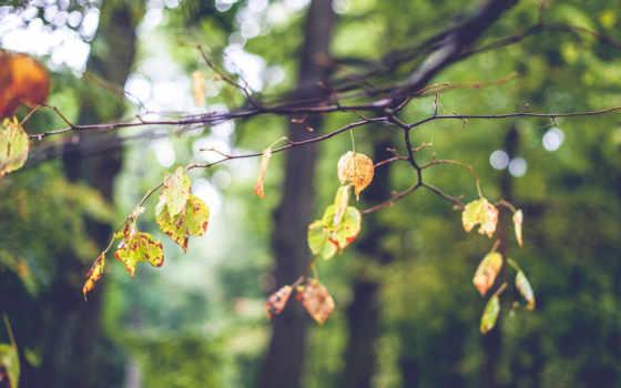 листья, ветка