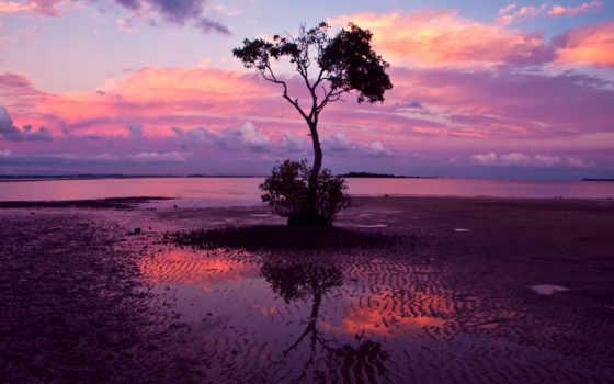дерево, природа, одинокое, небо, лес,