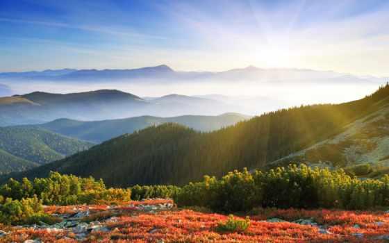 рассвет, утро, природа, туман, sun, лес, широкоформатные, горы, поле, rays,