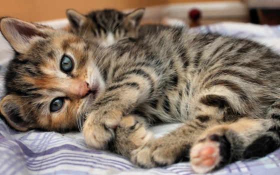 кот, лежит, свет