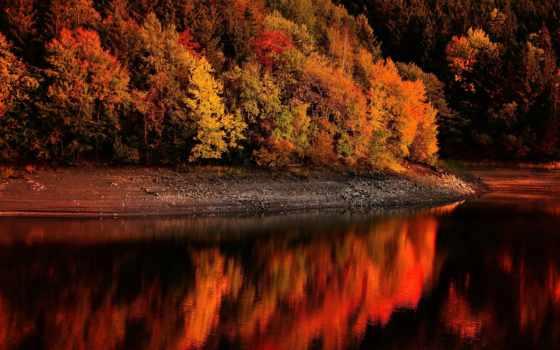 осень, природа, года, time, лес, картинка, тропинка, skate, boy,