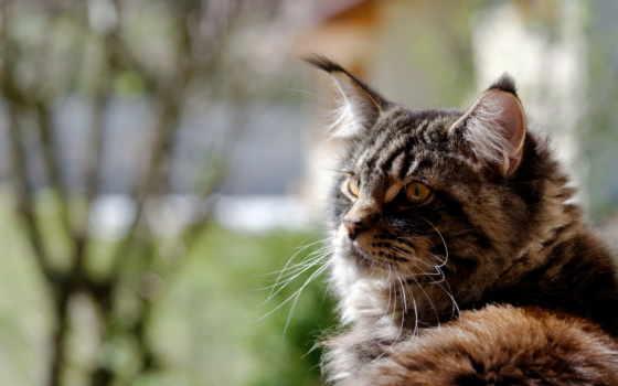 mein, kun, кот, широкоэкранные, широкоформатные, полноэкранные, мэн, кун,