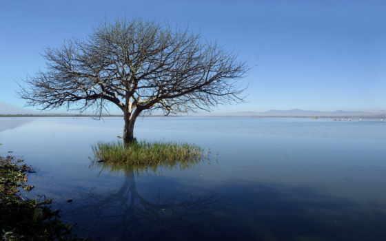 дерево, одинокий, landscape, print, photographic, озеро, природа,