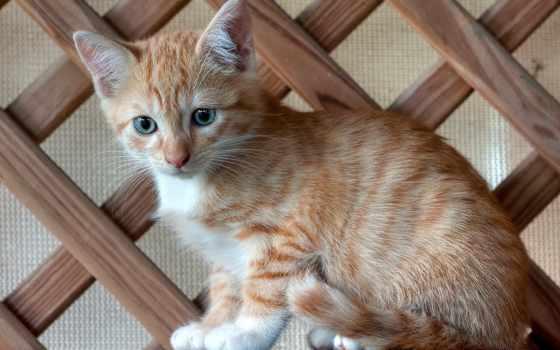 cats, pinterest, малыш, котенок, kotek, best, картинках, cкучаю, see,