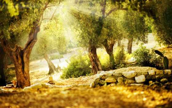 лес, природа, photoshop, adobe, детали, free, photos, размытость, card, мотивы,