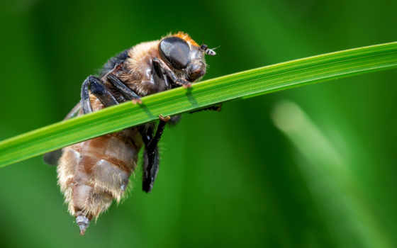 ultra, насекомое