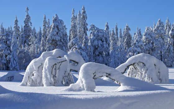 winter, лес, подарками, оказывается, балконе, столом, снегом,
