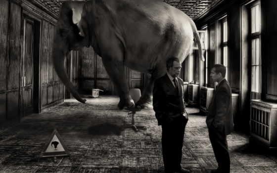 слон, комната, you