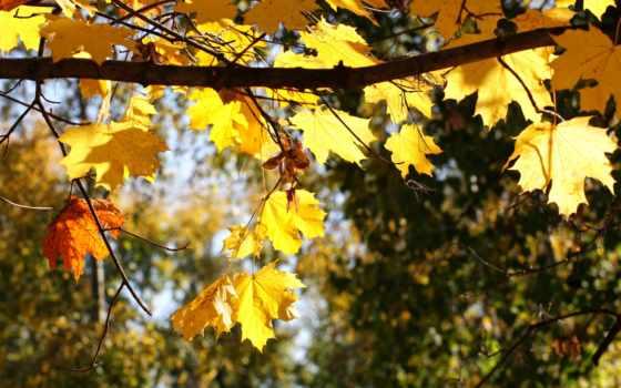 природа, листья Фон № 33543 разрешение 2560x1600