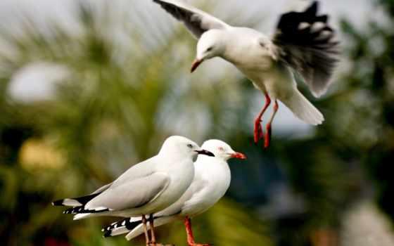 птица, animals, birds