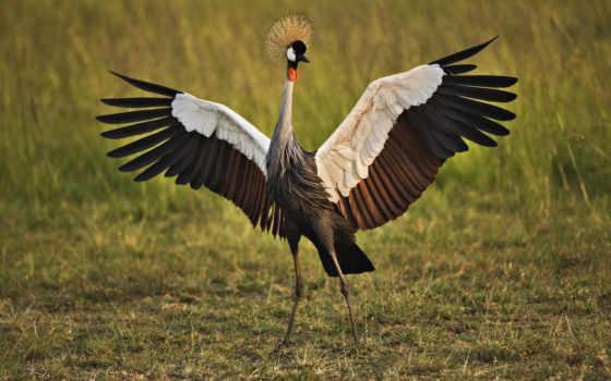 птицы, самые, красивые
