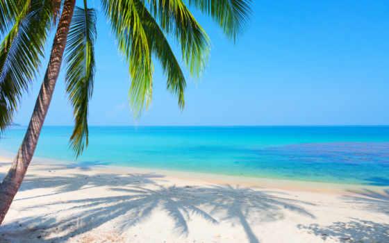море, пляж, palm