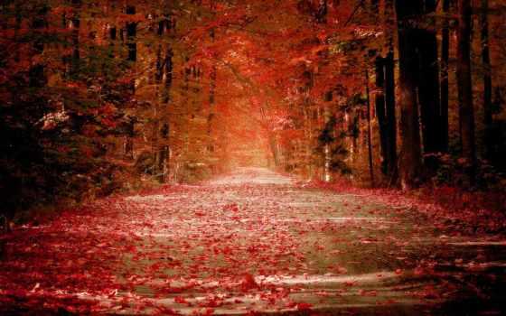 осень, лес, самые