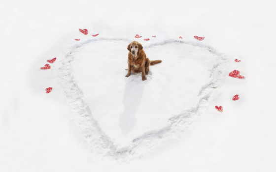 love, winter, сердце