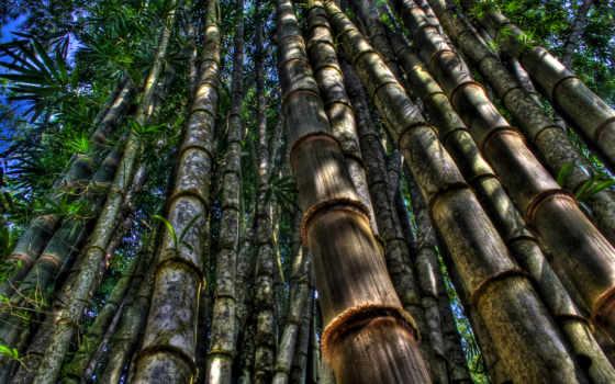 tre, cây, việt, нам, hành, những, với, tuyệt,