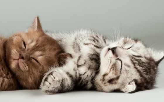 котики, люди, котенок, коты, zhivotnye, людей, котята, могут, изображений, заработать, миллионов,