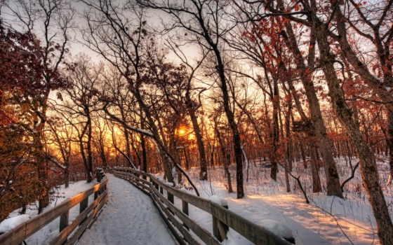 сол, inverno, paisagem, natureza, neve, floresta, caminho, papéis, pôr, parede,