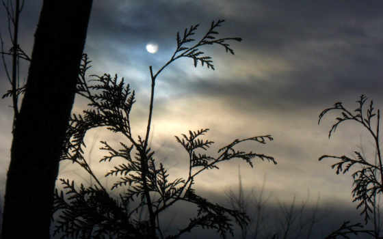 погода, пасмурная, небо, пасмурное, лесу,