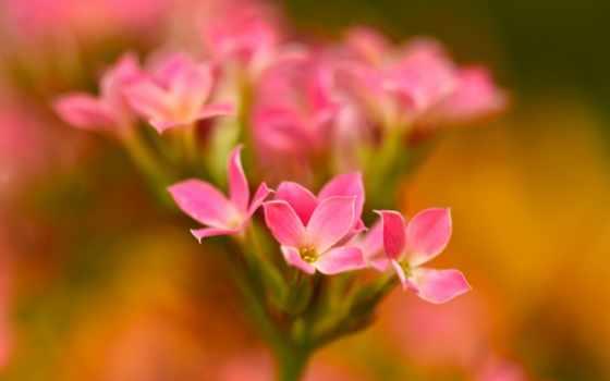 images, instagram, об, cvety, petals, desktop, природа,