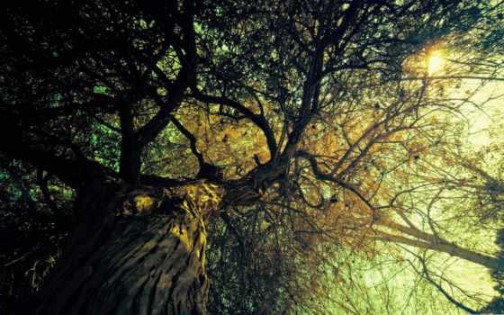 vintage, дерево, devushki, sun, свет, ветки, рисунок, free, макро,