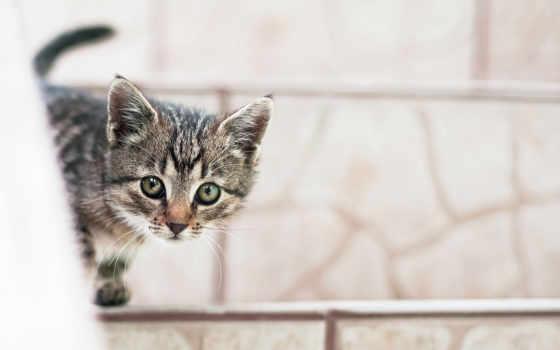 кот, котенок, short, бесплатные, широкоформатные, красивые,
