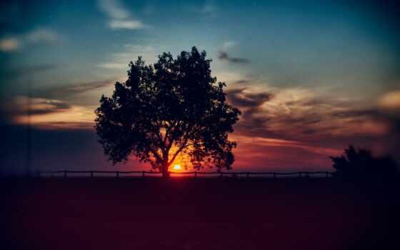zakat, дерево, oblako, телефон, небо, горизонт, природа, landscape, закат, zastavka, скачат