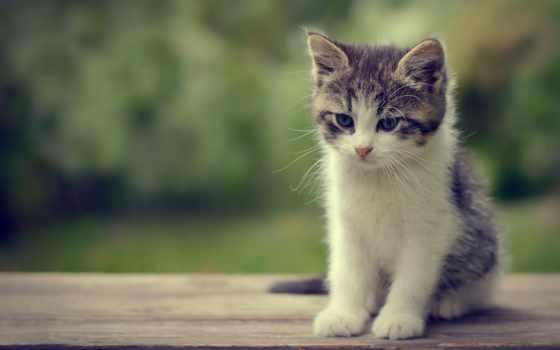 cute, котенок, kittens