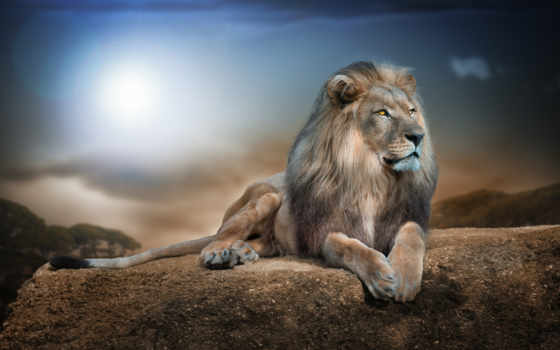 lion, king, зверей Фон № 97366 разрешение 1920x1200
