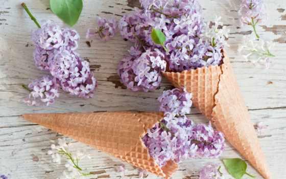 цветы, рогатый, сиреневый, вафельный, вафельных, сирени, рожках,