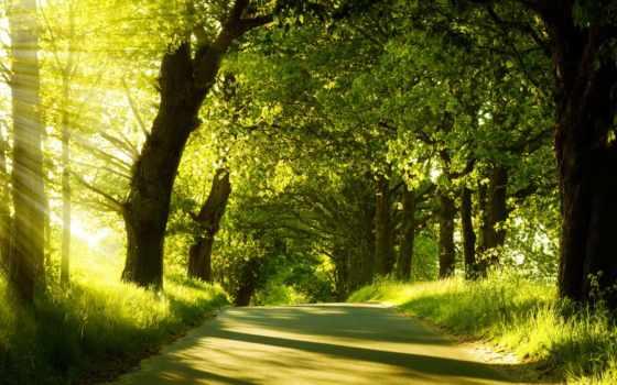 аллея, зелёная, красивые
