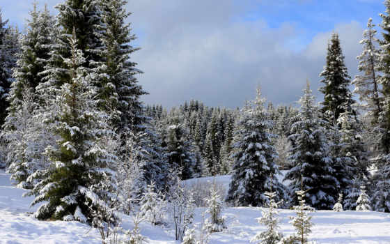 winter, природа, снег, russian, лес, eli, хабаровск, край, леса, картинка,
