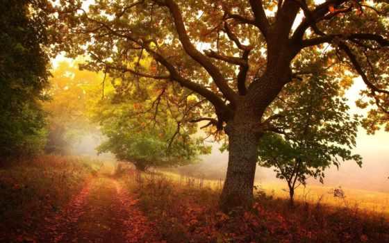 дорога, дерево, дымка, осень, пасть, leaf, ноутбук, телефон,