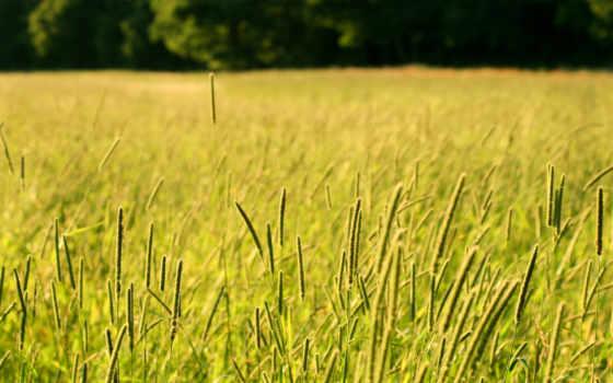 трава, поле, газон, long, free, небо, машины, freepik,