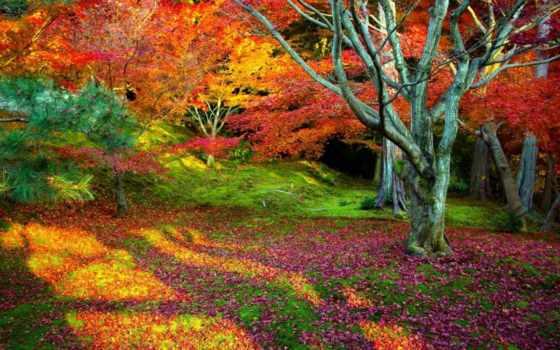 осень, природа, landscape, trees, листва, лес, дерево,