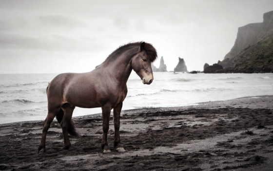 лошадь, spuni, taustapildid, моря, берега, instagram, animal, море, девушка,