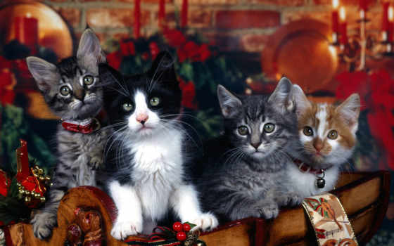 christmas, pretty, kittens, desktop, weihnachtsgeschenk, photos, cats, xmas, рождественской, fotos, free, download, high, gift, winter, cat, click, stock, tiernos, gatitos,