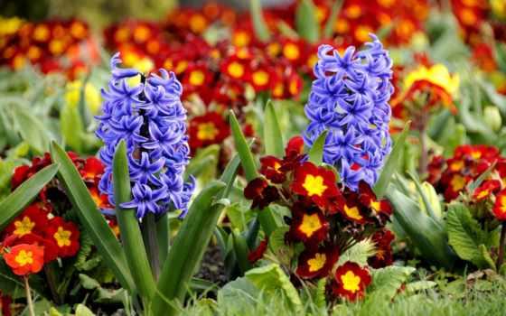 цветы, виды, весенние