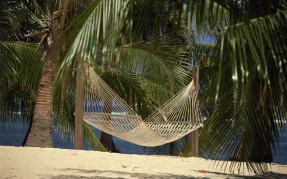 гамак, tropical, пальмы